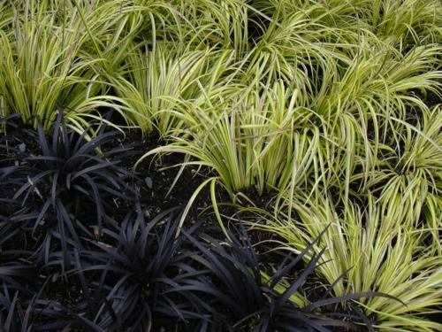 erfolgreiche Gartengestaltung blumenarten pflanzenarten anbau