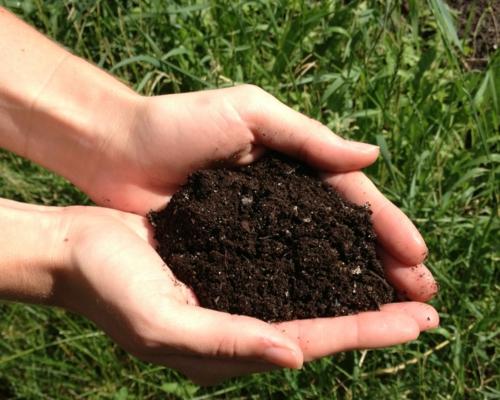erfolgreiche Gartengestaltung rot pflanzenart feucht erde