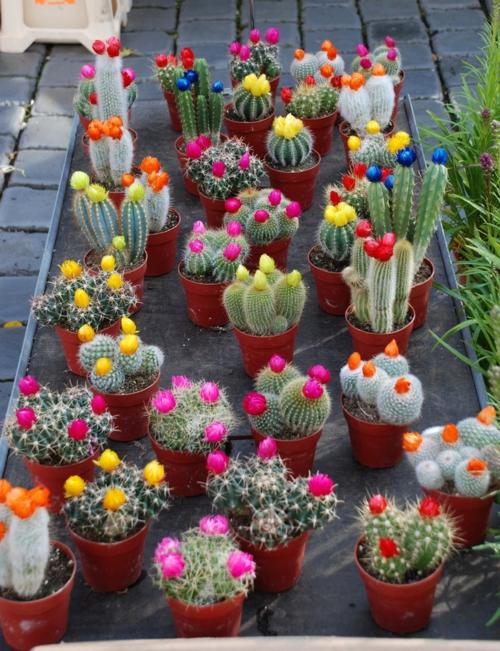 erfolgreiche-Gartengestaltung-rot-pflanzenart-kakteen