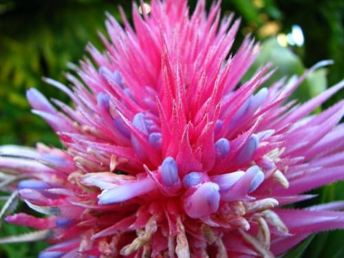 erfolgreiche Gartengestaltung rot pflanzenart rosarot blumen