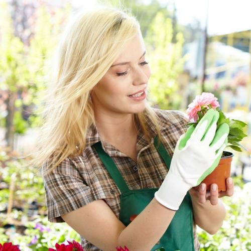 erfolgreiche Gartengestaltung rot pflanzenart schön gärtner