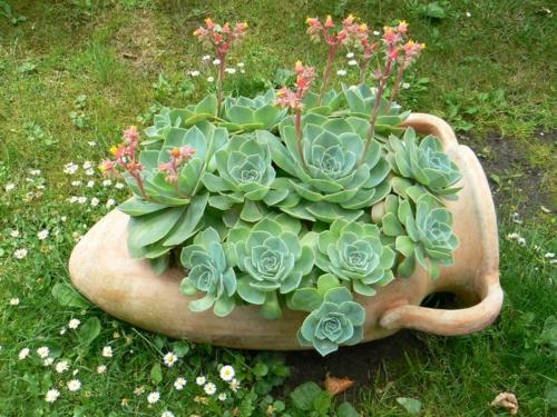 erfolgreiche Gartengestaltung rot pflanzenart sukkulenten