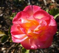 Farbgestaltung und bunte Wohnideen – Rosa im Einsatz