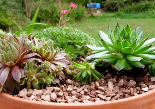 Gartengestaltung mit winterharten pflanzen for Gartengestaltung mit pflanzen