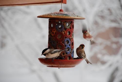 originelle vogelhäuser geschirr
