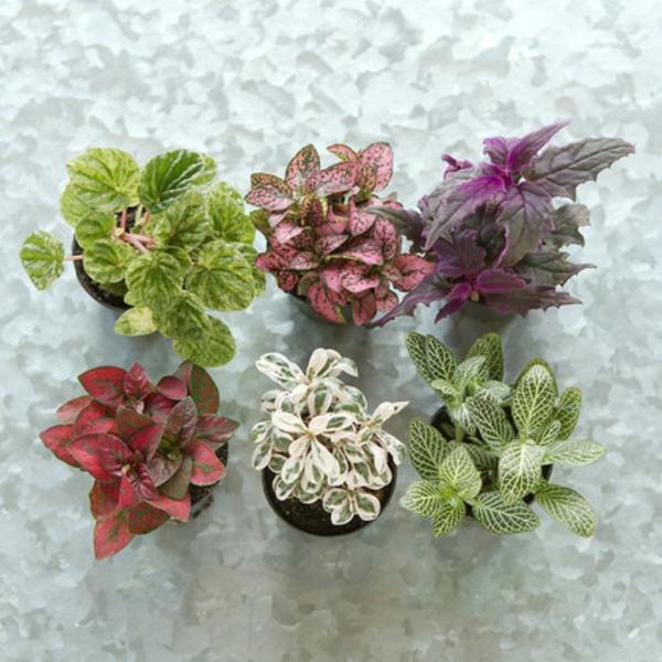 terrariumideen pflanzen sammlung