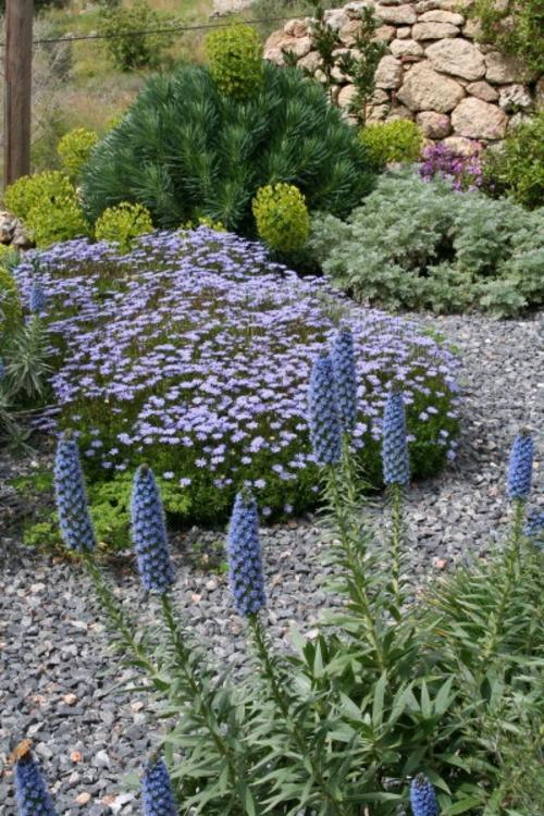 blüten lila landschaft Gartengestaltung mit Kies