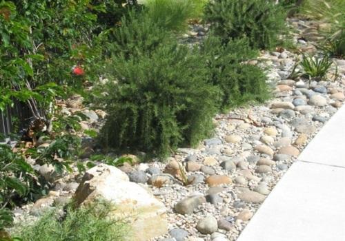 Gartengestaltung natur mit Kies landschaft fußweg pflanzen