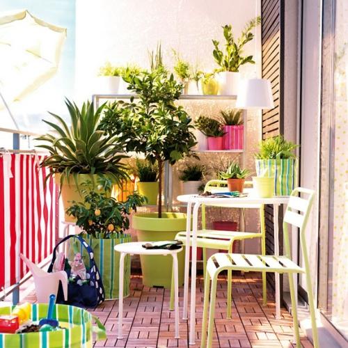 exotisch balkonpflanzen bewohnlich entwerfen idee gemütlich sonnig