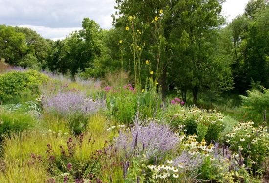 Awesome Einheimische Pflanzen Im Garten Feld Pflanzenwelt Great Ideas