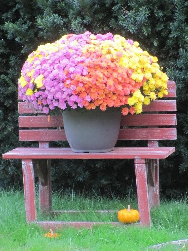 Gartenzubeh r und gartendeko die ihre landschaft beleben - Gartenbank bunt ...