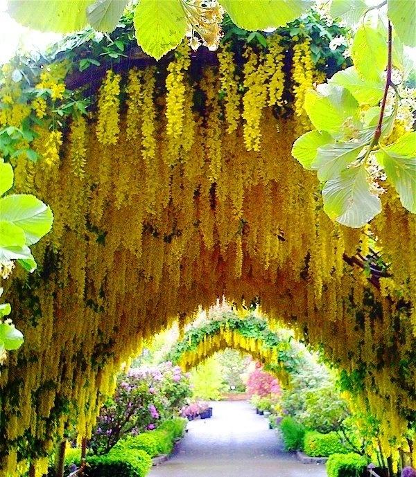 garten gestalten gelbes blumengewölbe