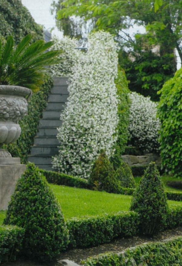 garten gestalten immergrüne pflanzen dekoideen exterior