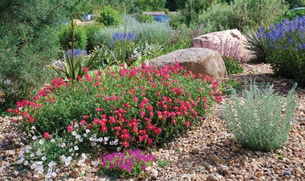 garten ideen gartengestaltung staudenpflanzen stein kies sommerblumen