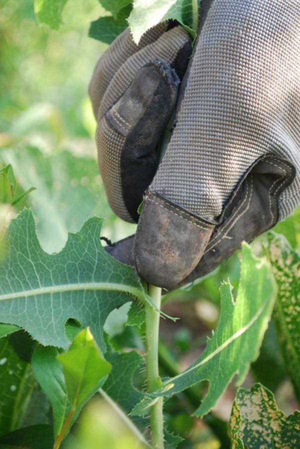 garten und landschaftsbau diy pflanzen
