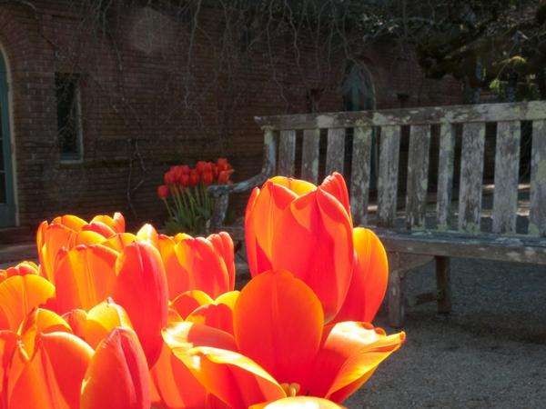 garten und landschaftsbau gartengestaltung ideen mit tulpen