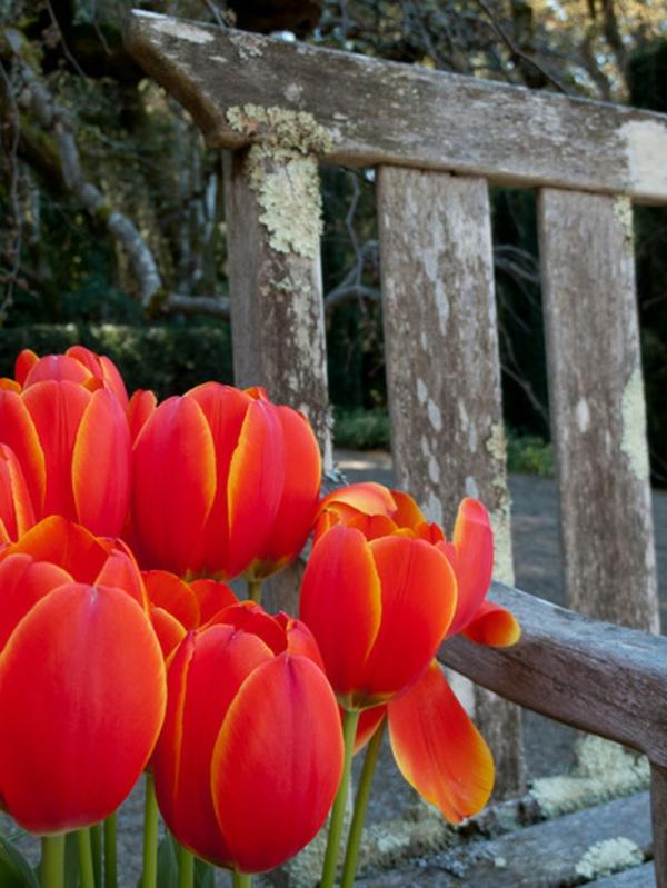 garten und landschaftsbau gartengestaltung tulpen ideen