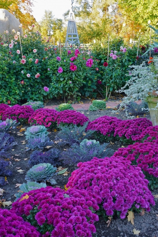 gartengestaltung bilder lila blumenreich pflanzen