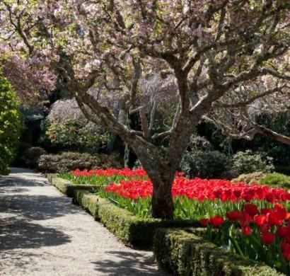 Gartengestaltung ideen mit fr hlingsblumen die sch nheit - Gartengestaltung leicht gemacht ...