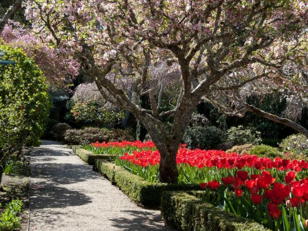 gartengestaltung ideen bäume hecke tulpen