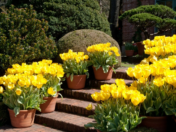 gartengestaltung ideen gelbe tulpen blumentöpfe treppen