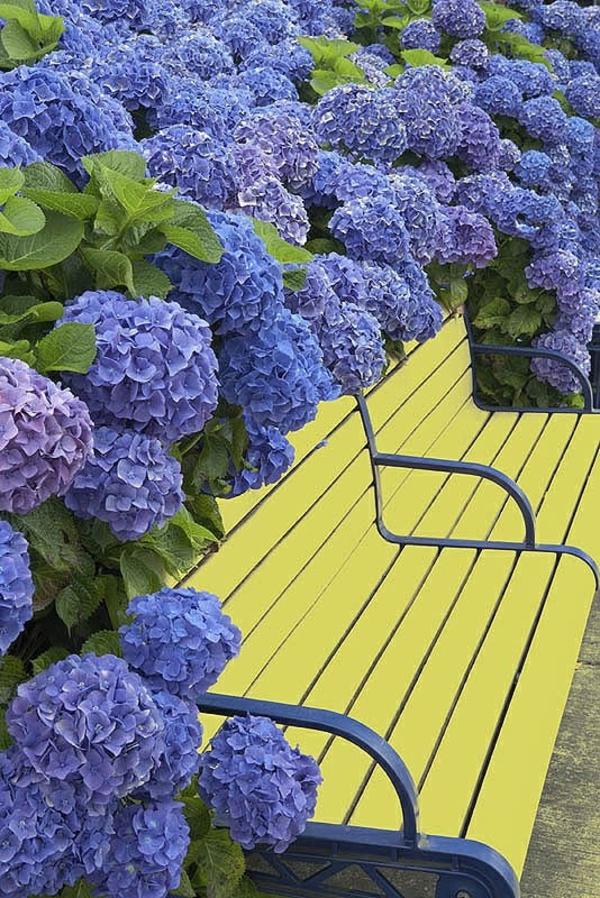 gartengestaltung ideen bilder gelbe sitzbank lila blau hortensie