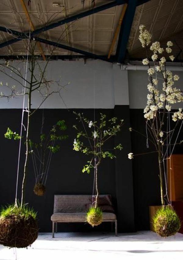 hängende zimmerpflanzen und balkonpflanzen bäume