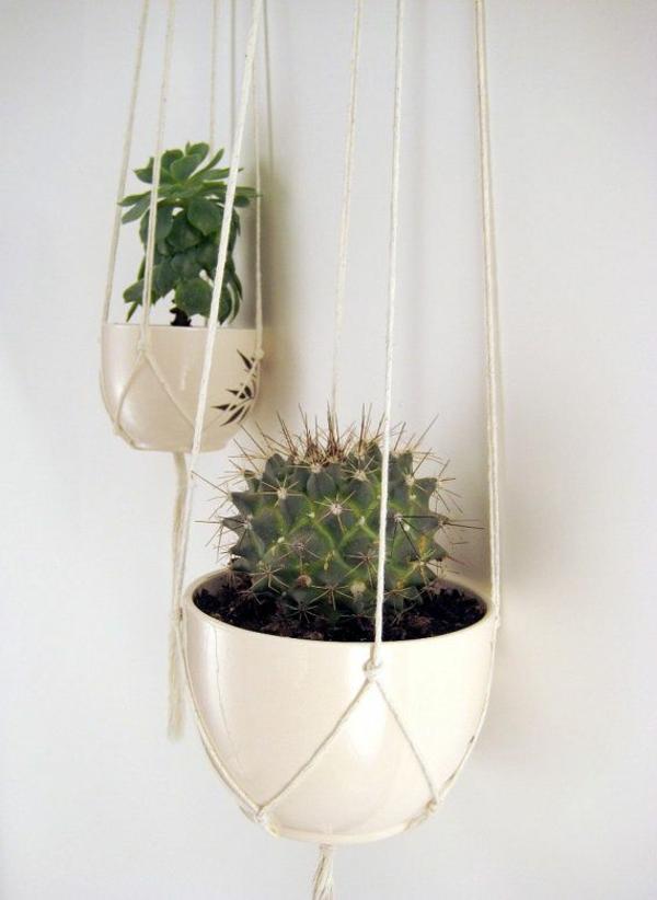balkonpflanzen kakteen hängende zimmerpflanzen
