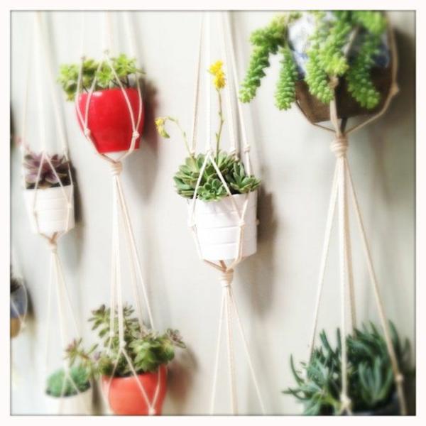 hängende zimmerpflanzen und balkonpflanzen seil