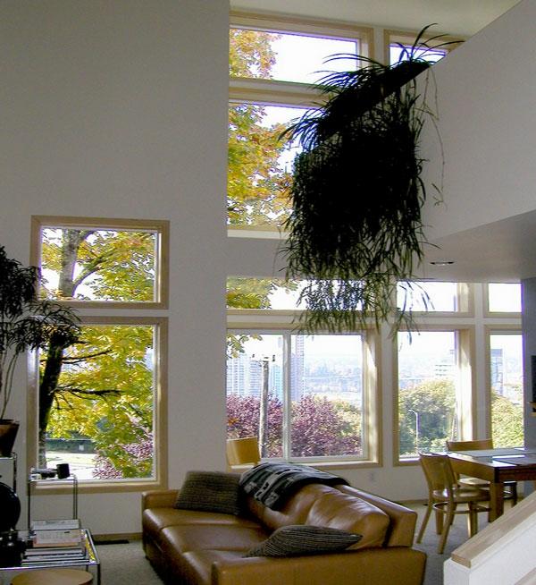 hoch decke glas fenster zimmerpflanzen hängepflanzen