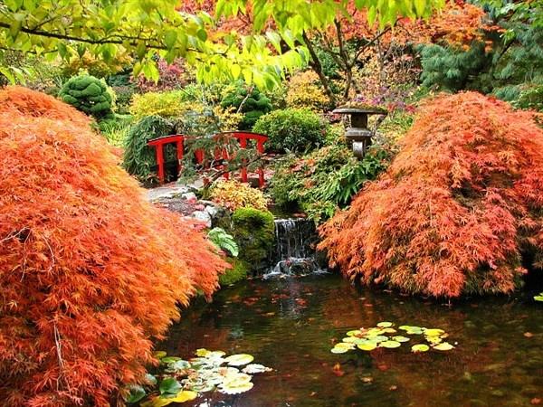 japanischer garten farbige pflanzenbeete rote brücke