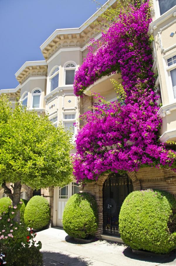 moderne architektur haus landschaft kletterblumen resized