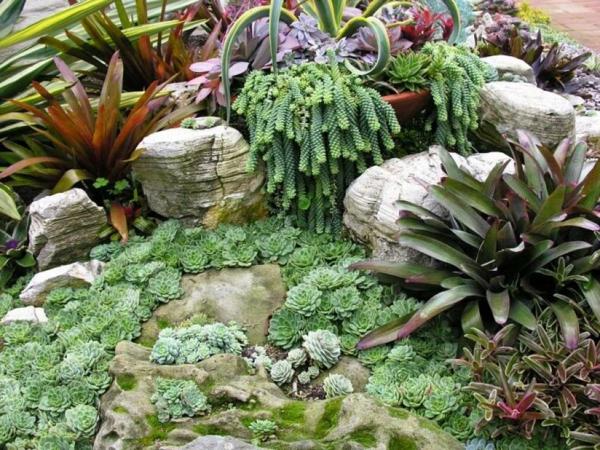 sukkulenten gartenideen natursteine moos tropische pflanzen