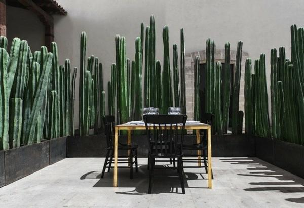 terrasse sichtschutz lebendig luftig kakteen esstisch stühle