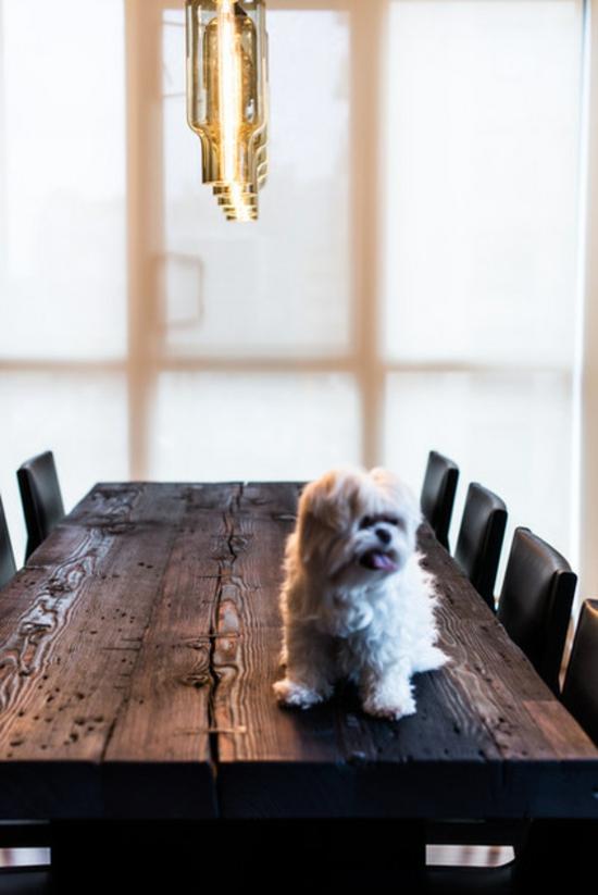 tipps und tricks haustier hund freizeit genießen