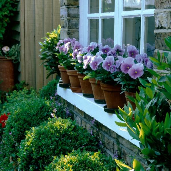 blumentöpfe zimmerpflanzen fenster vorgarten gestalten natur