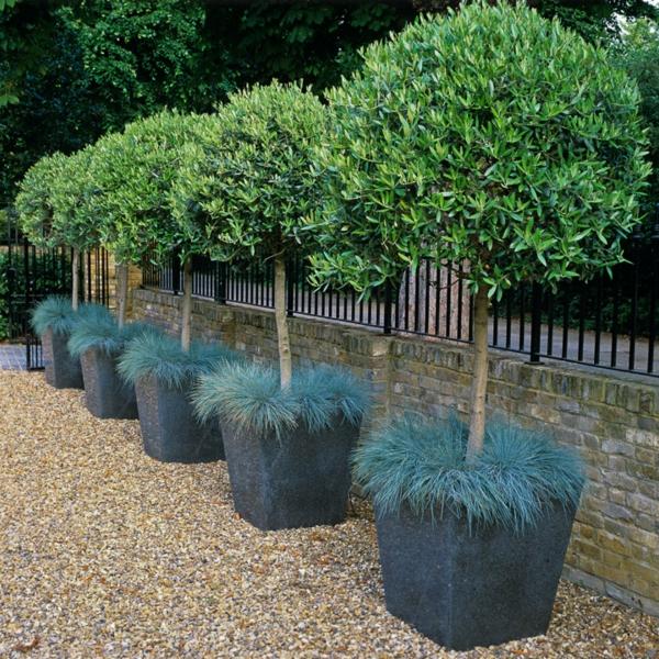 vorgarten gestalten pflanzkübel gras strauch gartenzaun