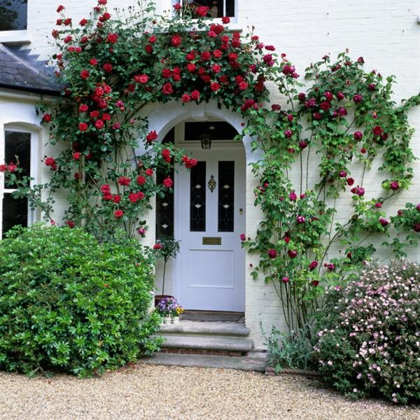 vorgarten gestalten rote gartenrosen weiß fassade