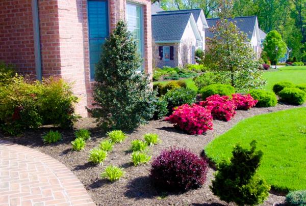 Vorgarten mit Kies gestalten blumen fußweg