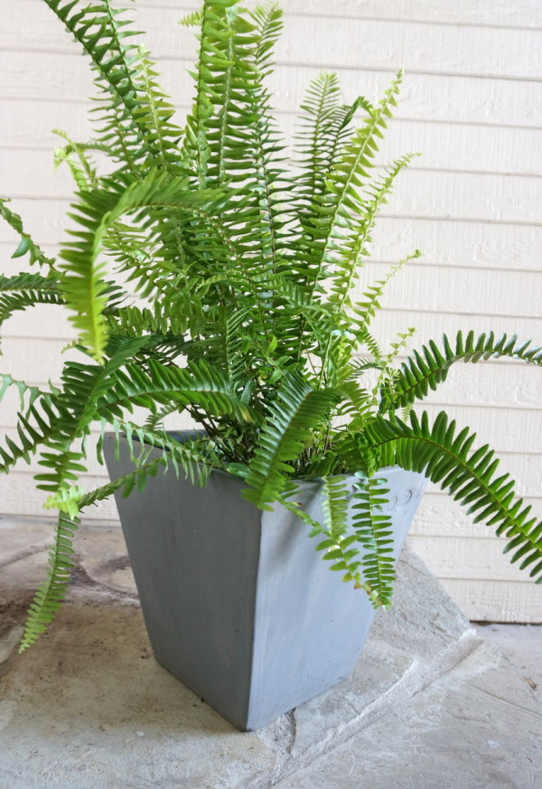 außenbereich und garten umgestalten blumentopfpflanzen