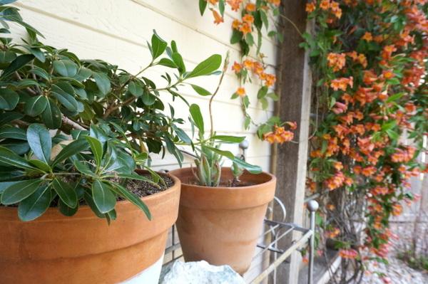 außenbereich und garten umgestalten erfrischen blumentopfpflanzen blumenkasten