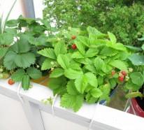 Balkon bepflanzen – Wie können Sie das richtig tun?