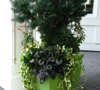 Gartenpflanzen, die pflegeleicht und effektvoll sind – der kriechende Günsel