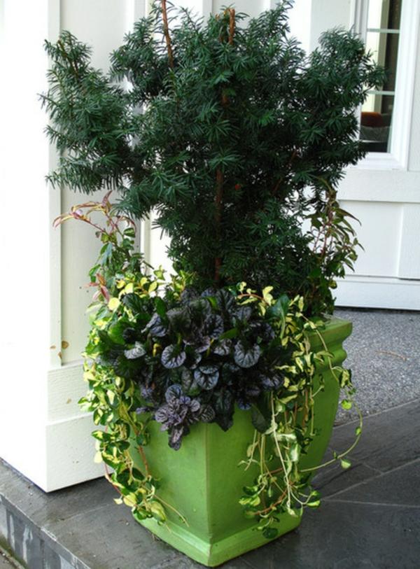 blumentopf zimmerpflanzen gartenpflanzen günsel blau