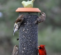 Vogelfutterhäuschen gibt Ihrem Garten einen lustigeren Look