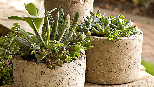 diy projekte garten bastelideen balkonpflanzen blumentopf sukkulenten