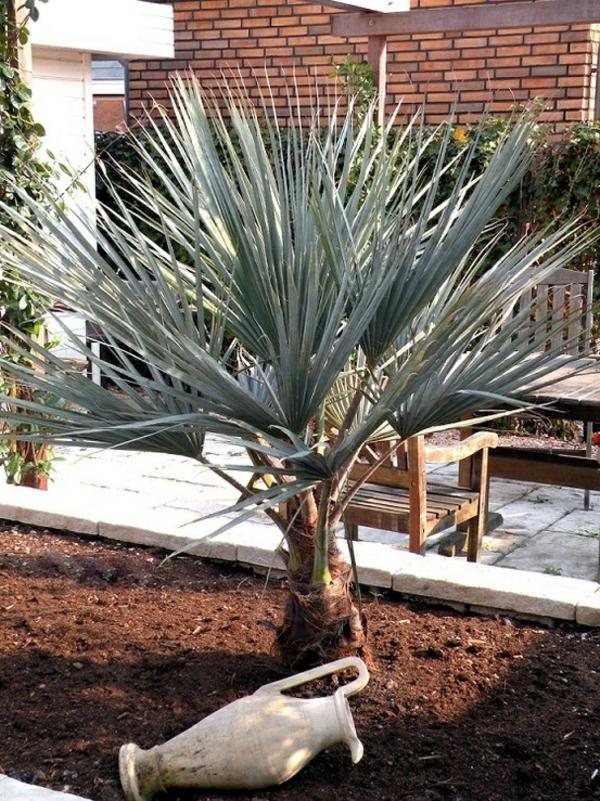 erdboden mittelmeer palmen exotisch gartengestaltung