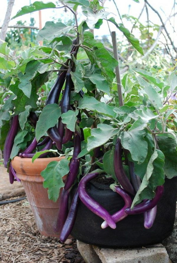 essbare bl ten und pflanzen in der gartengestaltung 9 tipps