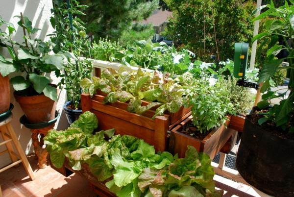 essbare pflanzen in unterschiedlichen container