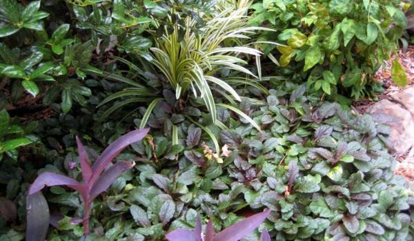gartengestaltung gartenpflanzen günsel kriechend steinpflaster weg